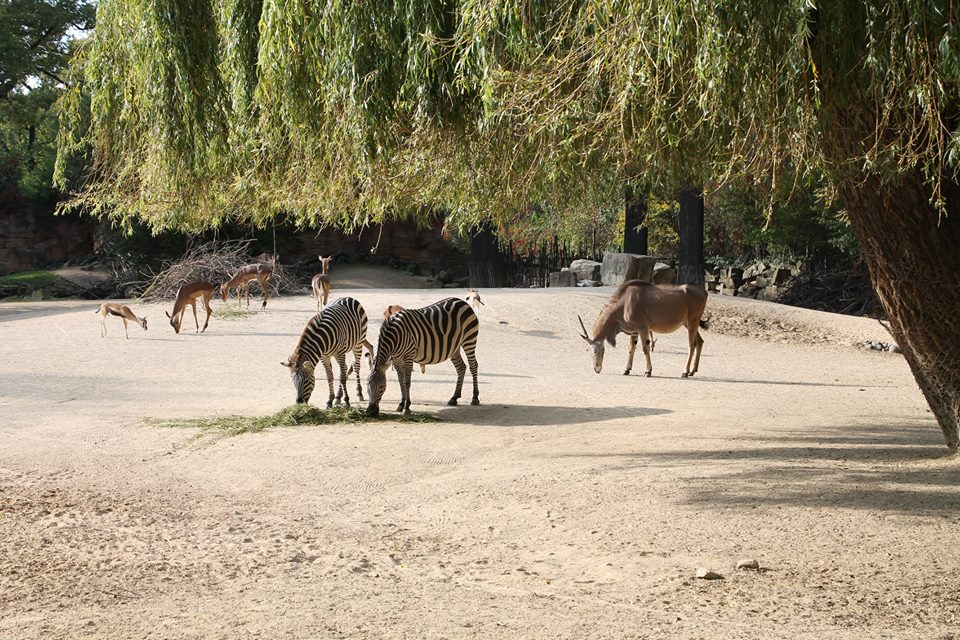 Zoo_Hananover_Tiere